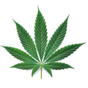 cannabis effecten seks.jpg